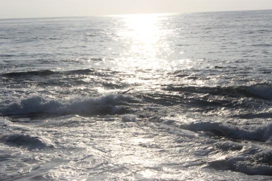 Peba no Pacífico.